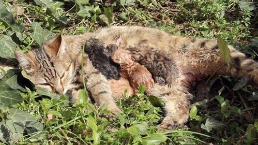 Thumbnail for Newborn Cat Babies