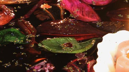 Thumbnail for Candles and Dry Leaves on the Water 1
