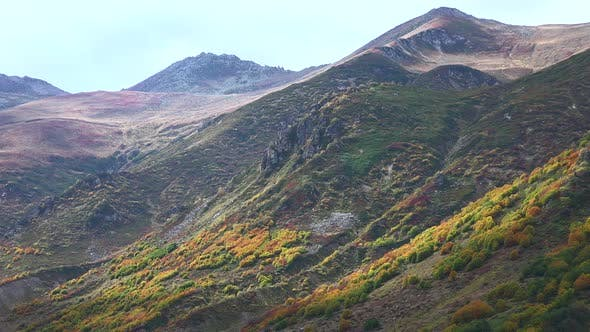 Thumbnail for Mountain Thickets Covered With Colorful Alpine Tundra Vegetation Colors in Approaching Autumn Season