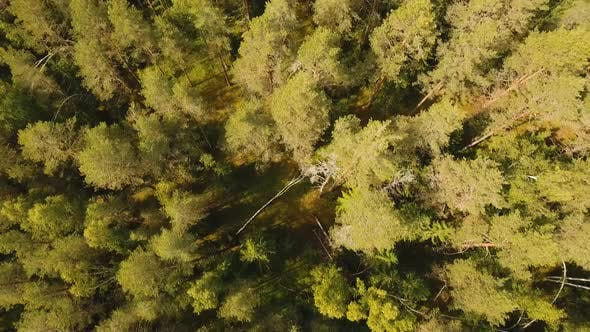 Thumbnail for Flight Over the Green Forest