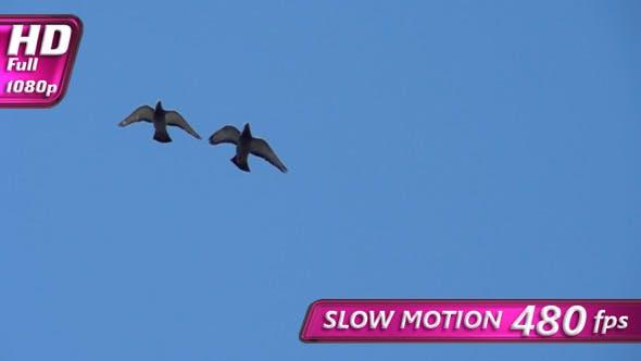 Pigeon Pair In The Blue Sky