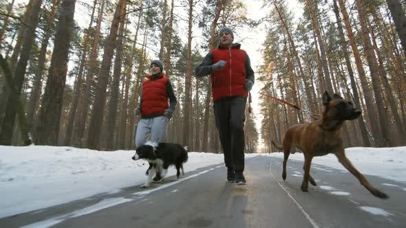 Thumbnail for Couple Jogging with Dogs in Winter Woods