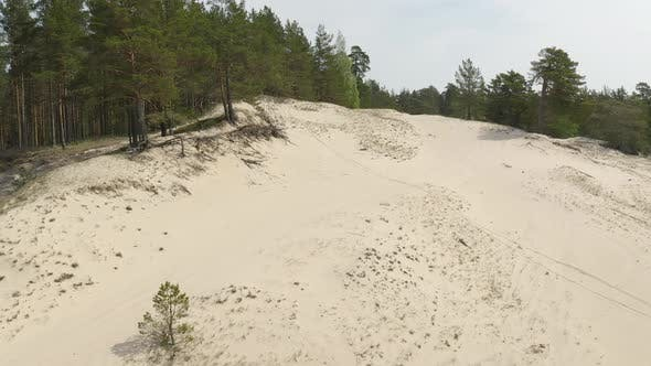 Thumbnail for Forest Dunes with Trees and Sea Sand