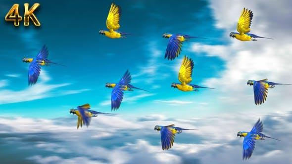 Thumbnail for Flock Perroquet - Normal et coloré 4K