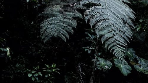 Moving along large leaves in a dark green coloration of a tropical forest