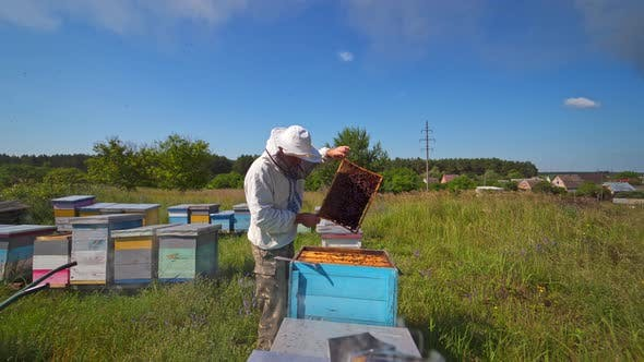 Thumbnail for Apiarist inspecting bees among nature