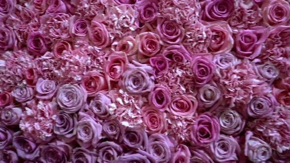 Thumbnail for Natürliche Rosen Hintergrund