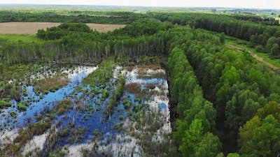 Flooded Forest After Winter In Lithuania