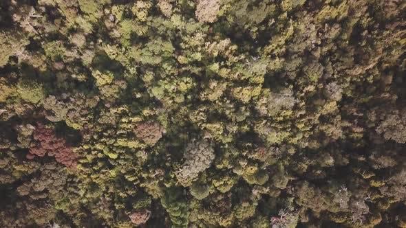 Thumbnail for Dense rainforest
