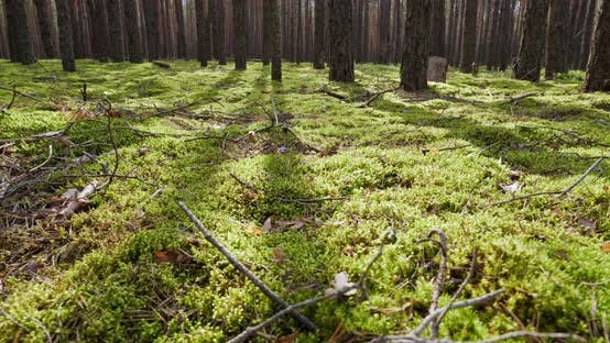 Moss In The Forest