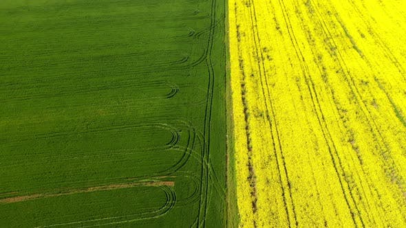 Thumbnail for Blooming Field with Rapeseed and Wheat