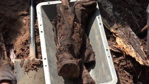 Exhumierung menschlicher Überreste