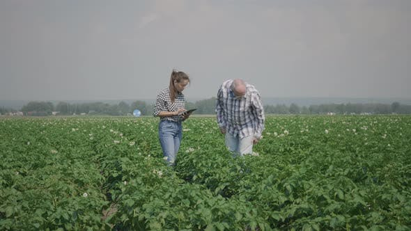 Thumbnail for Farmers in agricultural potato field