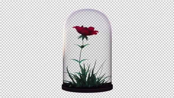 Growing Flower In The Glass Lantern