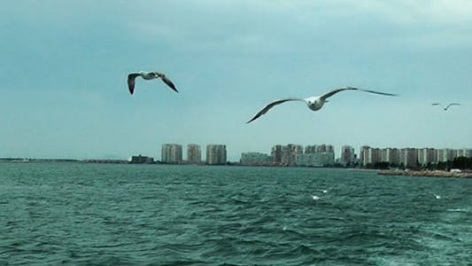 Thumbnail for Seagulls Flying near the Ferryboat 4