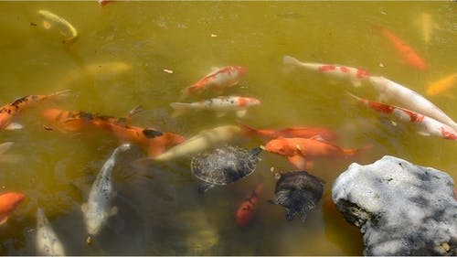 Fishes 5