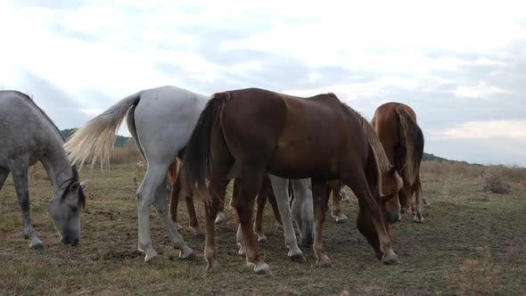 Herd Of Wild Horses In Nature