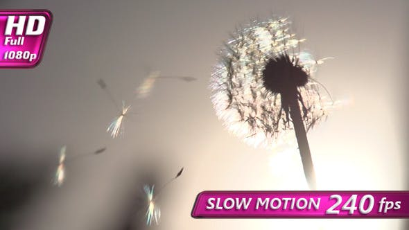 Thumbnail for Blowing Dandelion Seeds