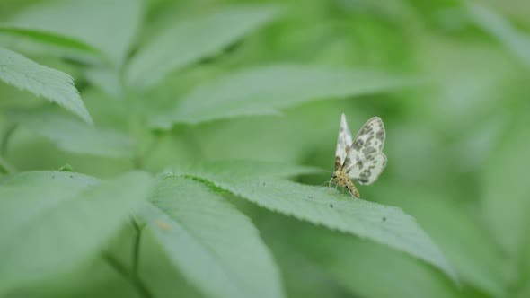 Thumbnail for Butterfly On A Green Leaf