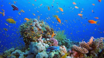 Underwater Tropical Colorful Fish