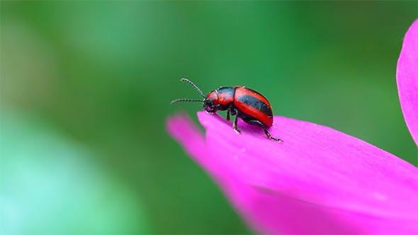 Thumbnail for Tiny Beetle