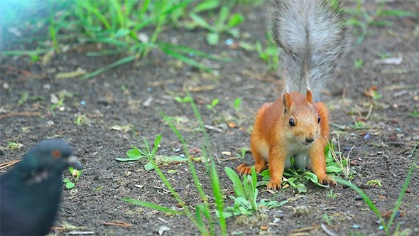 Cover Image for Squirrel