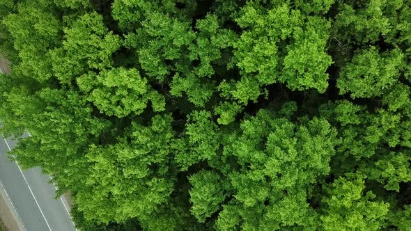 Drone's Eye View  Forrest From Above Aerial Top Down Green Forest Background Caucasus Russia