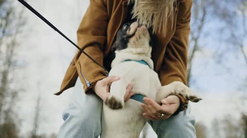 Cute French Bulldog Being Pet By LGBT Woman