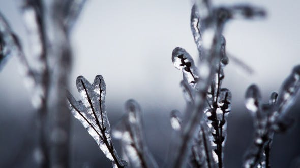 Thumbnail for Branches Of The Trees In Ice Crystals