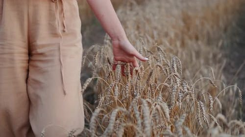 Cropped Shot of Woman Walking Through Heat Field and Stroking Crops