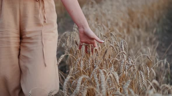 Thumbnail for Cropped Shot of Woman Walking Through Heat Field and Stroking Crops