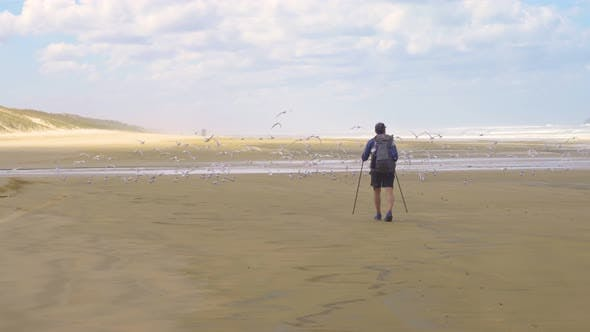 Thumbnail for Men is Walking on Beach with Seagulls