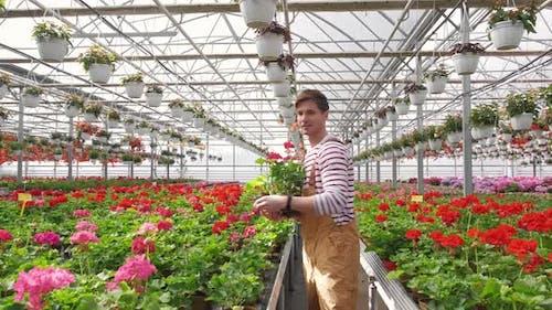 Der männliche Gärtner kümmert sich um Pflanzen, während er Blumen im Gewächshaus gärtnern