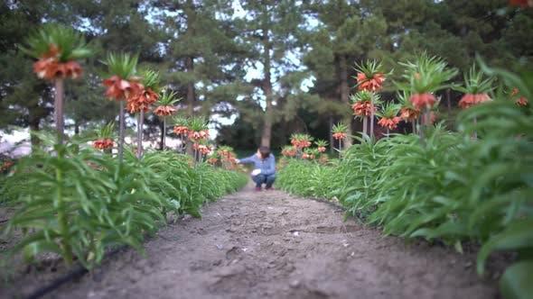 Thumbnail for Flower Garden