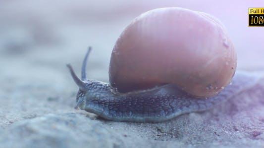 Thumbnail for Snail Nature 2