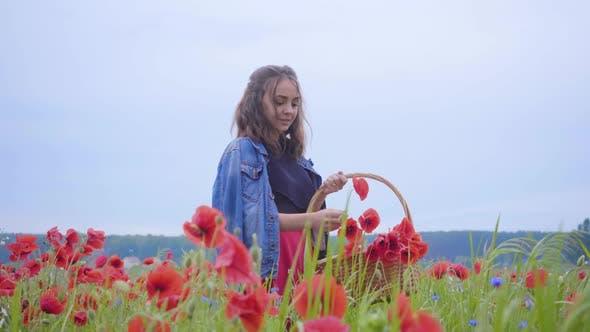Thumbnail for Portrait Pretty Girl Walking in Poppy Field Gathering Flowers in the Wicker Basket