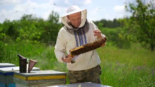 Beekeeping process