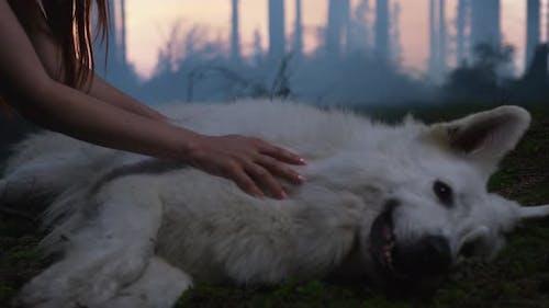 Hand caressing a dog