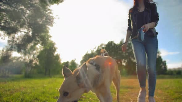 Thumbnail for Woman in Jeans Leads Her Dog on a Leash in the Park.