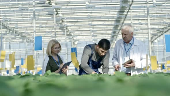 Thumbnail for Greenhouse Supervisors Inspecting Work of Employee