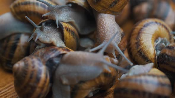 Thumbnail for Snails Interact with Each Other Close Up