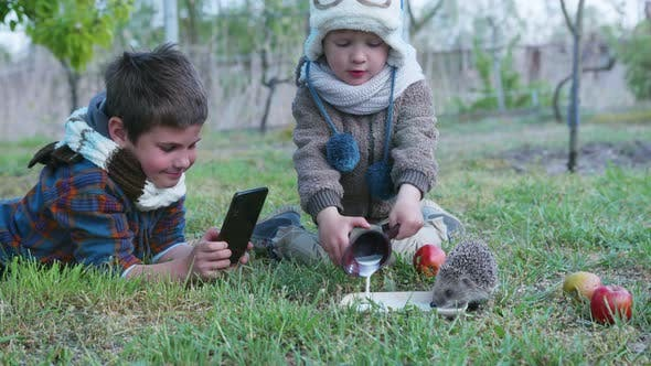 Thumbnail for Little Male Children Have Fun Playing with a Wild Animal, Shoot Video on Smartphone and Treat