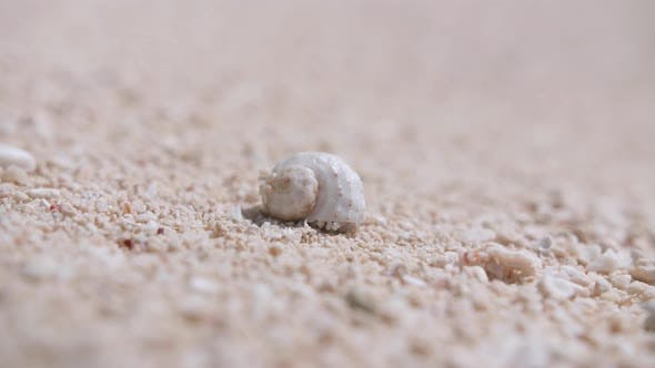 Hermit crab crawling on a sand beach.