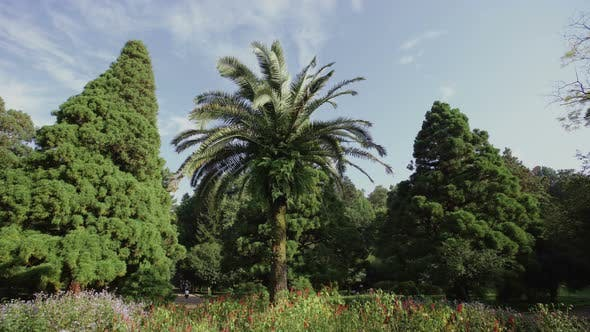 Thumbnail for Palm Tree Grows on a Flower Meadow in a Coniferous Forest. Sunny Day in the Botanical Park
