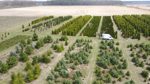 Aerial View People Digging Conifers on an Industrial Scale