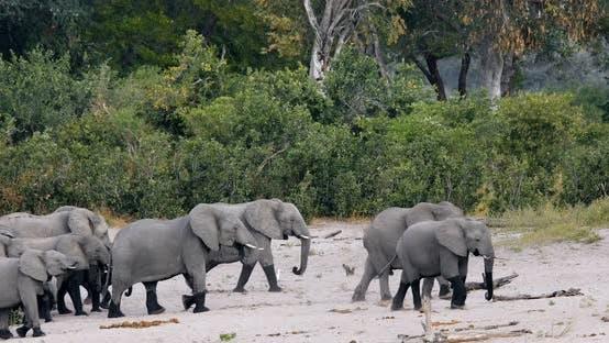 African elephant, Bwabwata Namibia, Africa safari wildlife