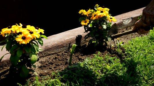 Gartenarbeit im Garten