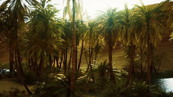 Thumbnail for Palm Trees Inside the Dunes