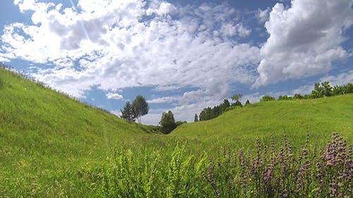 Green Meadow 4