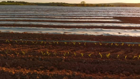 Thumbnail for Furrows row pattern in a plowed field